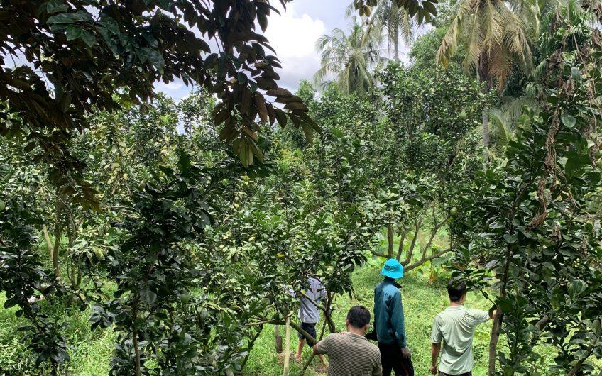 Nền Đẹp Cần Bán Tại Phường Đông Thuận Giá Chỉ hơn 340 Tr